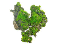Green moss on white background Stock Photography