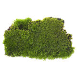 Green moss on a white background Royalty Free Stock Image