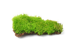 Green moss  on white bakground Royalty Free Stock Photography