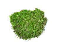 Green moss  on white bakground Royalty Free Stock Photos