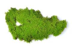 Green moss  on white bakground Stock Photo