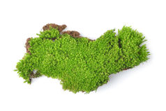Green moss on white bakground Royalty Free Stock Image