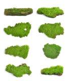 Green moss on white bakground Stock Photos