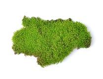 Green moss  on white bakground Stock Image