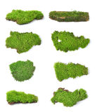 Green moss  on white bakground Royalty Free Stock Photos
