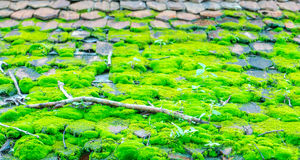 Green moss on the wood roof . Royalty Free Stock Photo