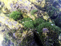Green moss on the wood Stock Photos