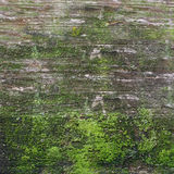 Green moss on wood stock images