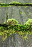 Green moss on a wooden hut roof Royalty Free Stock Photos