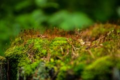 Green moss and yellow grass on a tree in the forest stock photography