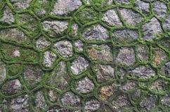 green mossväggen arkivbilder