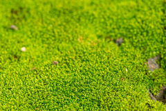 Green mossy background Stock Photos