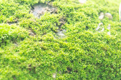 Green mossy. On big stone Stock Images