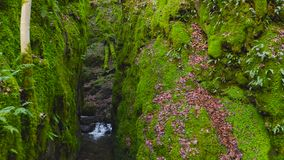 Green mossy cleft with a creek running through at Dollar Glen Park in Scotland.  stock video footage