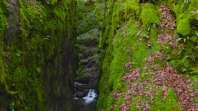 Green mossy cleft with a creek running through at Dollar Glen Park in Scotland.  stock footage