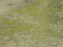 Green Mossy Ground Texture On Gravel Royalty Free Stock Photo