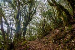Rainforest, La Gomera. Green and mossy rainforest of La Gomera, Canary islands stock photography
