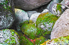 Green mossy Royalty Free Stock Images