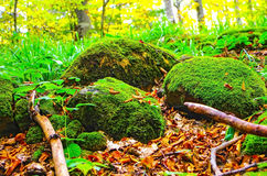 Green mossy rocks Royalty Free Stock Image