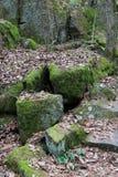 Mossy rocks. Green mossy rocks Royalty Free Stock Photo