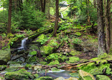 Green Mossy Rocks and Wooden Water Chute Royalty Free Stock Photo