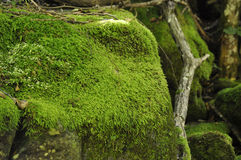 Green mossy stones Stock Photos
