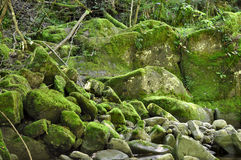 Green mossy stones Royalty Free Stock Photo