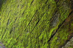 Green mossy wall with tiles Royalty Free Stock Image
