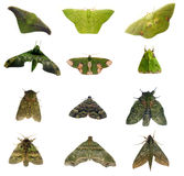 Green moths royalty free stock photos