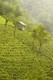 Green mountain. Small building on side of green mountain Royalty Free Stock Photos