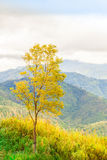 Green mountain and cloud Royalty Free Stock Photography