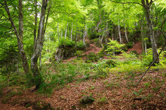 Green mountain forest. In Pyrenees, France Stock Photos