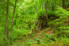 Green mountain forest in Pyrenees Stock Images