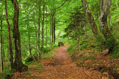 Green mountain forest in Pyrenees Royalty Free Stock Photo