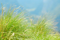 Green mountain grass close-up. Royalty Free Stock Photo