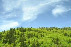 Green Mountain Hill Springtime Stock Photography