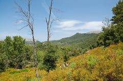 Green mountain landscape Royalty Free Stock Photo