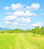 Green mountain meadow. In spring time stock image