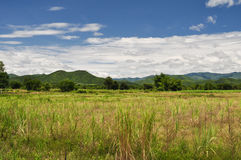 Green mountain and meadow in thailand. Beautiful view with the green mountain and meadow in thailand Stock Image