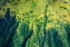 Green mountain ridges dominate Alaska wilderness landscape Royalty Free Stock Photos