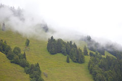 Green mountain with trees Royalty Free Stock Photography