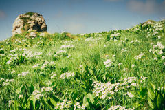 Green Mountain valley with white rhododendron Stock Photo