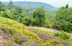 Green mountain view with roadway Royalty Free Stock Photos