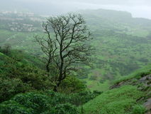 Green mountainous landscape. Scenic view of green mountainous landscape with stark tree in foreground Stock Photography