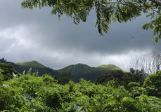 Green Mountains. The rich Hawaiian greenery with mountains in a background on Maui island, Hawaii Stock Image