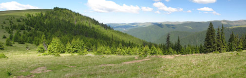 Green mountains. Green grass and forest mountains Stock Images