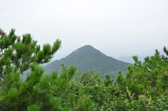Green mountains. Mountains are covered many green pine tree Royalty Free Stock Photo