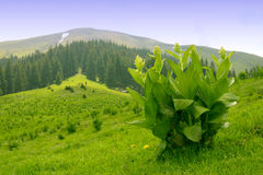 Green mountains stock photos