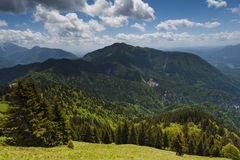 Green mountains covered with forest Stock Images