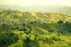 Green mountains with morning sun. Green hay meadow morning mountains natural forest harvest effect scenery plant photo colorful mountain nature rural landscape Royalty Free Stock Photos